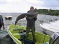 Sum 131 cm, 15 kg złowiony 05.07.2009 w jez.Turawa przez Darka Draba