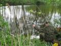 <b> Dobra zanęta i z wody wybieram rybę za rybą :)</b> (fot. Rafał Kobyłecki)