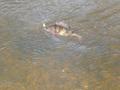 jeszcze w wodzie