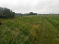 Nad rozległymi nadwarciańskimi łąkami sunęły nisko szare deszczowe chmury…