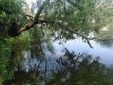 Brzegi rzeki urzekały urozmaiconym krajobrazem - spokojnymi zatoczkami, wstecznymi prądami i bogatą roślinnością brzegową…