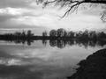 """Widok na łowisko Nr 655 Studzienna od strony Rzeki Odry na wysokości tak zwanego """"Tarliska"""" w kierunku tak zwanego """"Cypla"""""""