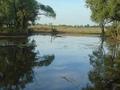 """Widok na łowisko Nr 619 Sudół """"Schodki"""" od strony łączki w kierunku na wysepkę z uschniętym drzewem"""
