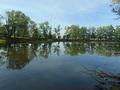 """Widok na """"Tarlisko"""" na łowisku Nr 619 Sudół od strony """"Cyplu""""."""