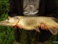 5.5 kg, 90 cm