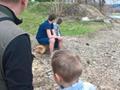 Obserwacja tarła świnki na rzece Osława