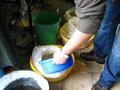 umieszczanie wylęgu pstrąga potokowego w workach