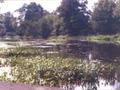 Rzeka Rawka. Doleck.