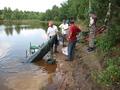 ważenie ryb