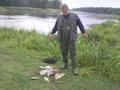 Leszcze po 2 kg. i 50 cm z Odry