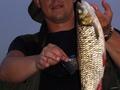 Wędkarz:  Wojtek Ryba: Kleń Leuciscus cephalus Długość: 42 cm Data: 10 lipca 2007 Miejsce: