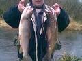 Wędkarz:  Wojtek Ryba: Pstrąg potokowy Salmo trutta fario Długość: 45 i 46 cm Data: 21 stycznia 2008 Miejsce: