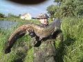 Sum o wadze 16 kg i długości 110 cm złowiony 19.09.2010 r. w godzinach popołudniowych na stawie w Drozdowicach Małych przez kol. Marka Giwojno. Przynęta - żywiec (karaś).