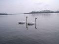 Jezioro Pile latem.