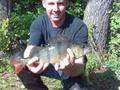 Ryba została złowiona 3 maja 2009r. na jeziorze Strzeszynek z łodzi przez kol. Piotra Behra Ryba mierzyła 40cm i po zrobieniu zdjęcia wróciła do wody
