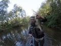 Piękny Jaź złowionego w rzece Rawce na odcinku Kamion - Samice ( przy moście, przy starym młynie który spłoną 2 lata temu) Ryba złowiona metodą spinningową (w zasadzie tylko taka stosuje:)) na tak zwaną blaszkę (widoczna na zdjęciu z miarką) ryba złowiona 16 września 2016 około godziny 10 rano. Jaź mierzył 43 natomiast waga nie znana. Po zrobieniu zdjęcia ryba trafiła spowrotem do wody. Gratulacje dla kol.Łukasza Zielonko