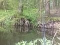 Niestety ryb nie bylo ale krajobraz wynagrodził .oto jedna z miejscówek , w tle pięknie podmyte drzewa na rzece Łupi 😀 próbowałem spod nich wyciągnąć okonia.