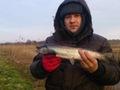 Paweł Gniadek troć 41 cm 0,61 kg złapana podczas zawodów Trociowych na rzece Grabowa dn. 09.02.2014 r.