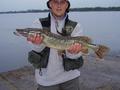 Wędkarz:  Wojtek Ryba: Szczupak Esox lucius Długość: 74 cm Data: 20 września 2007 Miejsce:
