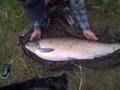 Amur złowiony na starorzeczu na wda ziarna kukurydzy, dnia 18.07.2014 o godzinie 21, waga 17,9 kg. długość 113 cm. Ryba została złowiona przez kolegę Andrzeja Hrycaja, ryba została wypuszczona do zbiornika :)