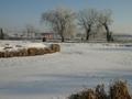 widok stawu zimą