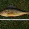 fishman13